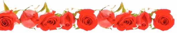 v-roses.jpg