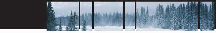 winter3_top.jpg