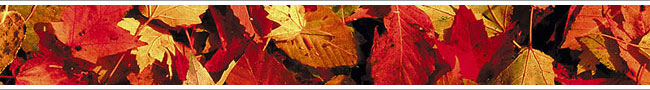 fall04-leaves.jpg