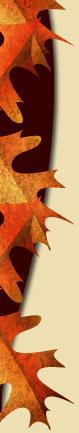 fall03-tl6.jpg